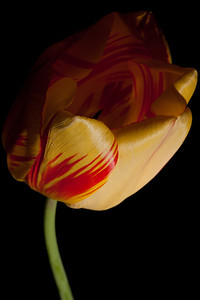 A flower from our yard. (Image taken by Sydney J. Kane on 01 Apr 2012 with Canon EOS 5D at ISO 100, f22.0, 1/60 sec and 150mm)