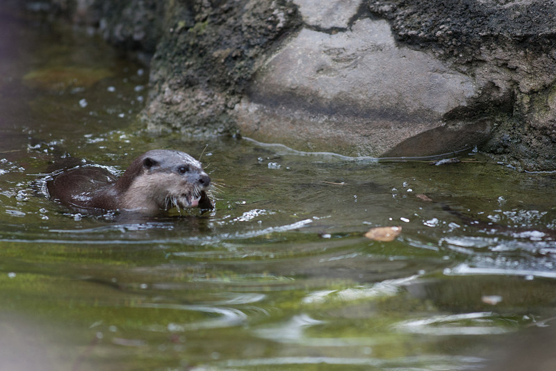 National Zoo (Image taken by Sydney J. Kane on 01 Sep 2012 with Canon EOS 5D at ISO 800, f2.8, 1/1000 sec and 300mm)
