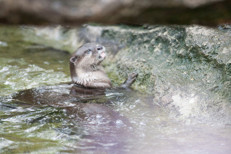 National Zoo (Image taken by Sydney J. Kane on 01 Sep 2012 with Canon EOS 5D at ISO 800, f2.8, 1/640 sec and 300mm)