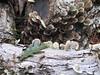 16 big thicket leaf and fungi