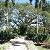 5. devotion tree