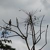 4. bird in tree