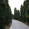 2. a walk through the upside down trees