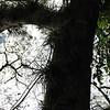 17. epiphytes