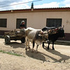 18. another ox cart