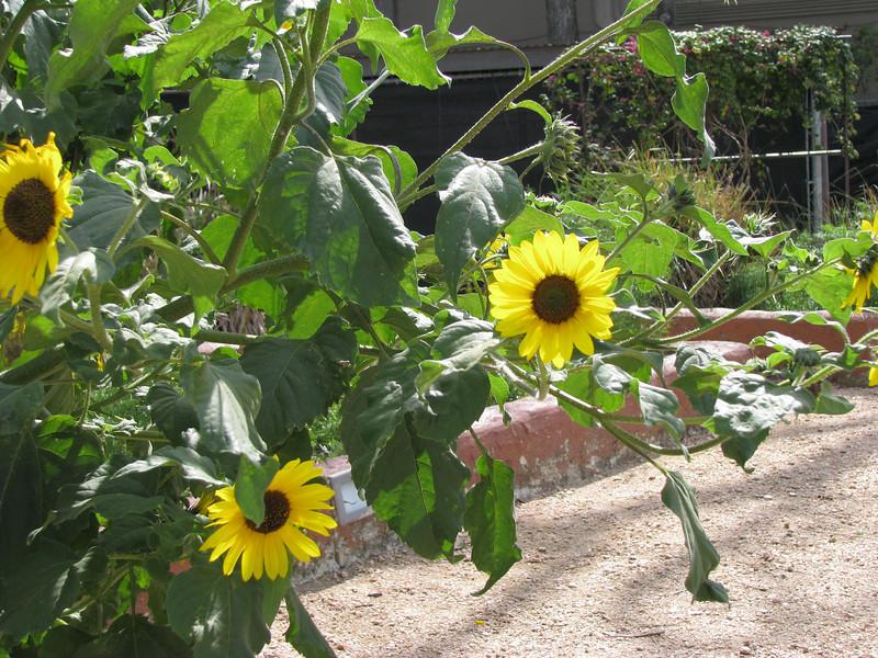 1.craft center garden