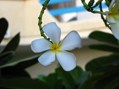 4  flower in the hotel garden