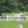 Blackberry Farm has a creamery, bakery, charcuterie, and grazing sheep on-site.
