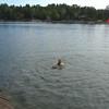 GRAMPIE SWIMMIN IN THE LAKE...