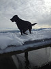 Kona strikes authoritative pose on pier.