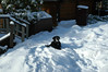 Snow reminds Shadow of her Labradoran ancestry.