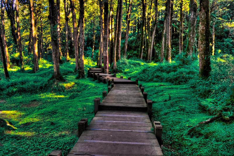 Forest Walk in Alishan, Taiwan