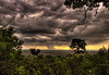 Rain Showers over the Massai Mara, Kenya, Africa
