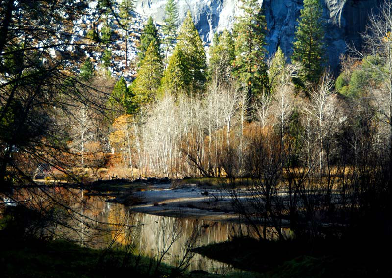 Valley Floor in Yosemite, California