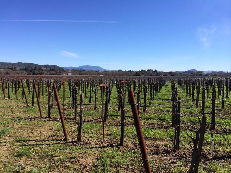 Friday:  Quivara Winery