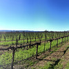Hafner Vineyards