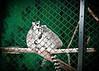 Lemurs at Zoo Boise