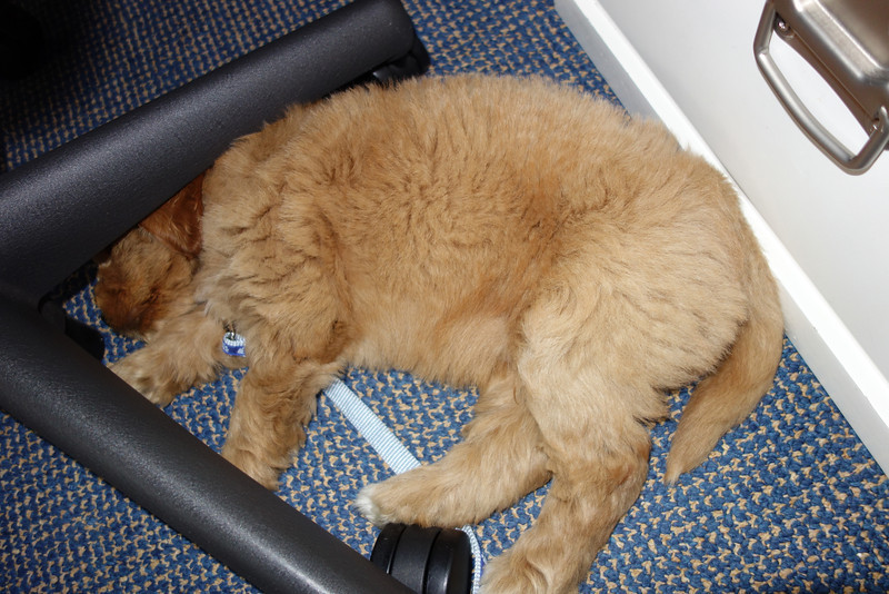 While I work on my computer, he sleeps under my chair.