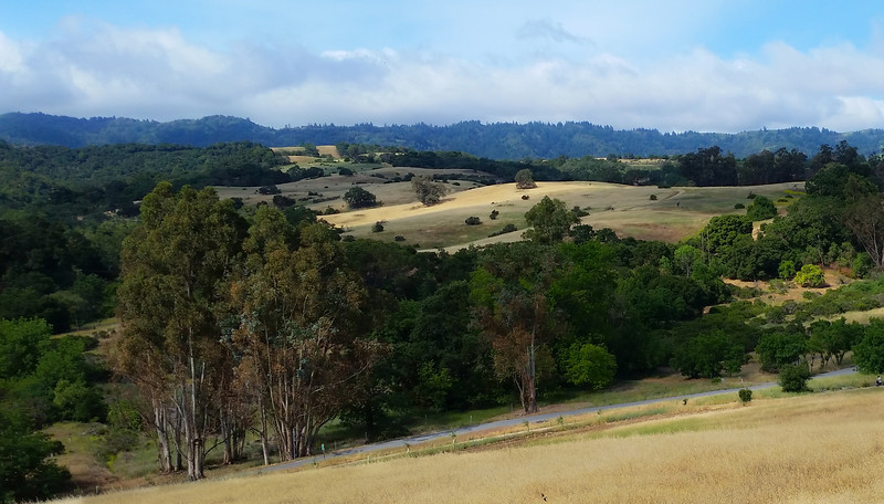 Our first walk on a trail - Arastradero preserve.  It was great.  I wish I'd brought a camera other than my phone.