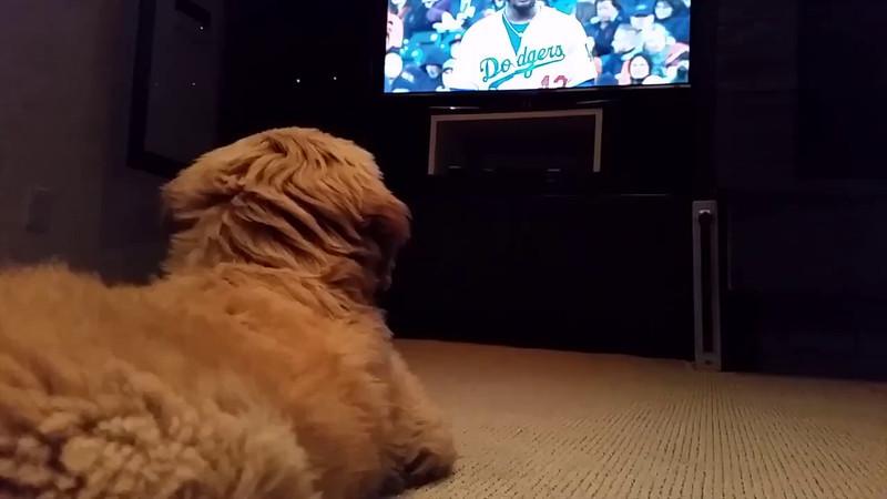 2014-04-15 Teddy watching the Giants