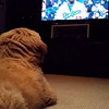2014-04-15 Teddy watching the Giants