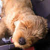 Sleeping in the roadster on the freeway