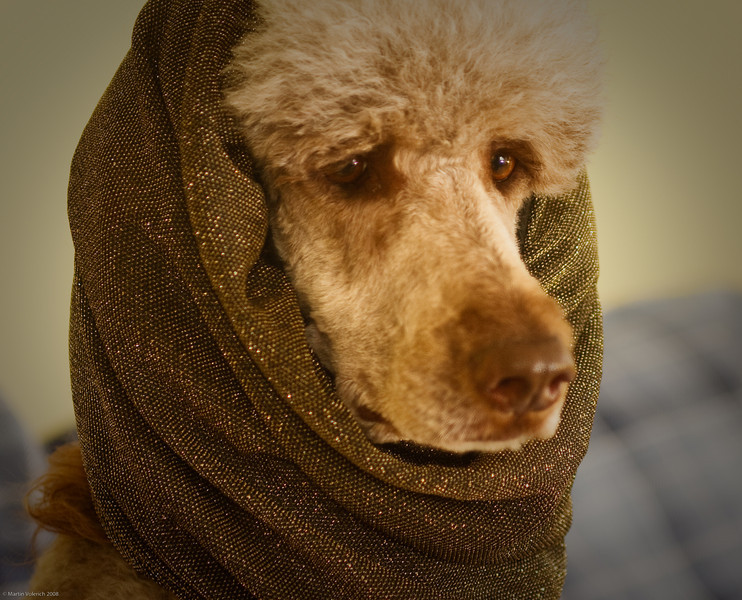 Teela wearing an elegant snood