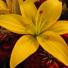 Flower from Pike's Market, Seattle