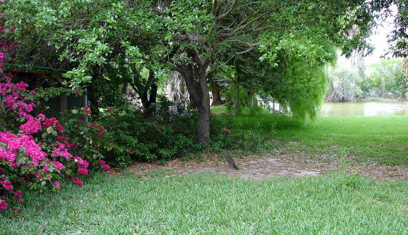 Jo Ann's yard
