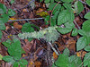 Lichen, 11-25-06
