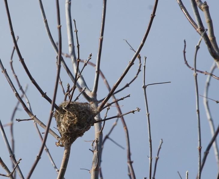 A tiny nest--hummingbird?