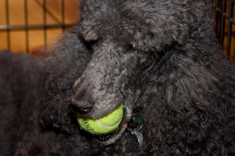 Keisha, wise old dog.