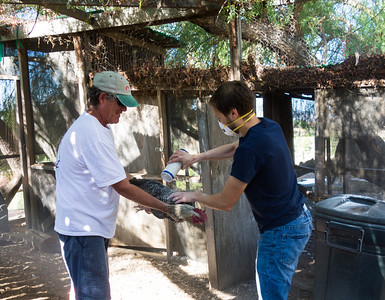 Scott and Mike (Corlis' step-dad) dust the chickens