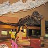 The T. Rex exhibit is always popular the boys.