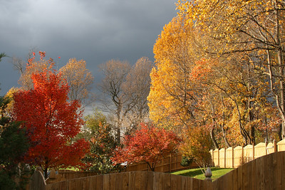 Fall colors against a stormy sky