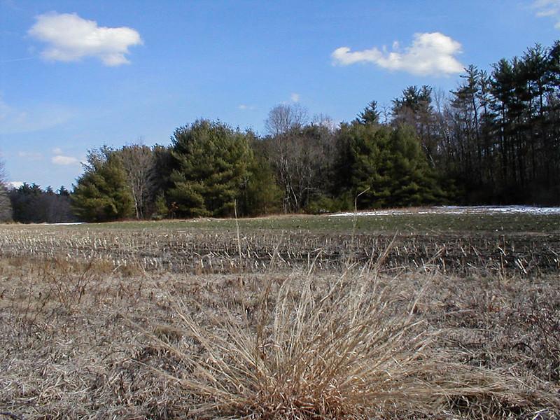 2002_03_24-2002 P3240295 West field cornstalks