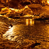 Water originates in White Oak Sinks in the Smokies, and flows through the cavern.