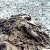 Eric buried on Atlantic coast<br /> 1977