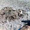 Seth buried on Atlantic coast<br /> 1977