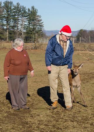 Christmas with Baby Deer-14