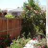 Existing east side quartzite stone walkway from garage to backyard. The roses are beautiful and full this spring! Photo taken early May 2007.