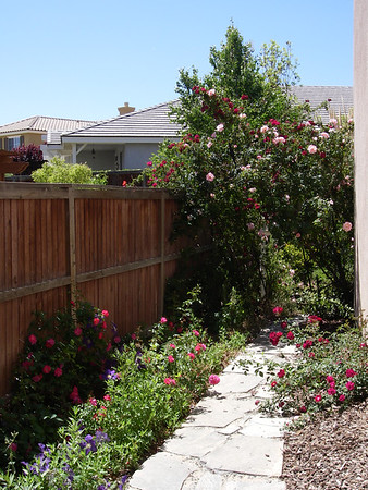 The Home Landscaping Project May-July, 2007