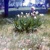 Seth<br /> La Porte Cemetery<br /> 1973ish