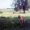 Ben as a puppy<br /> summer 1971