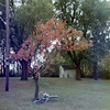 Christine climbing tree <br /> 1971
