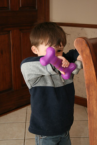 Tate weight-lifting the dog toys.