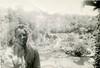 1943-09 Russell in garden near San Marco