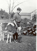 1928 Russell with calf