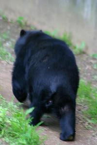 Black bear bottom