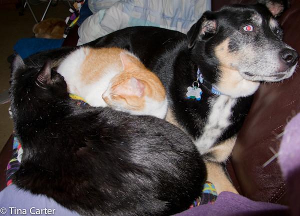 Chumley (orange) and Bosco (black)
